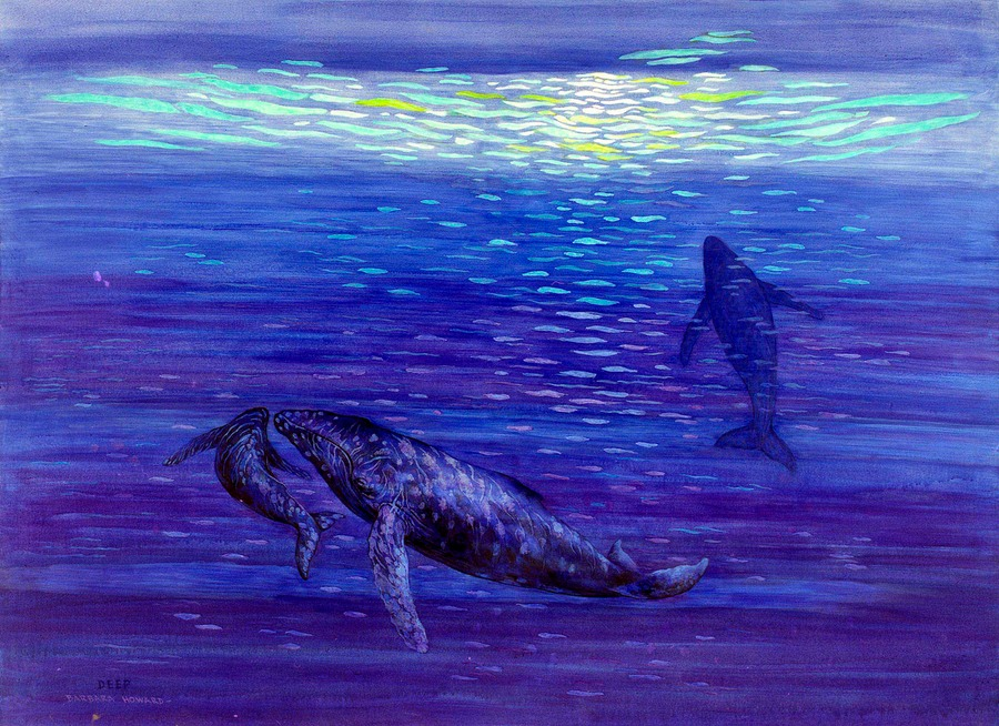 Humpback whales: Cow, Calf, Underwater