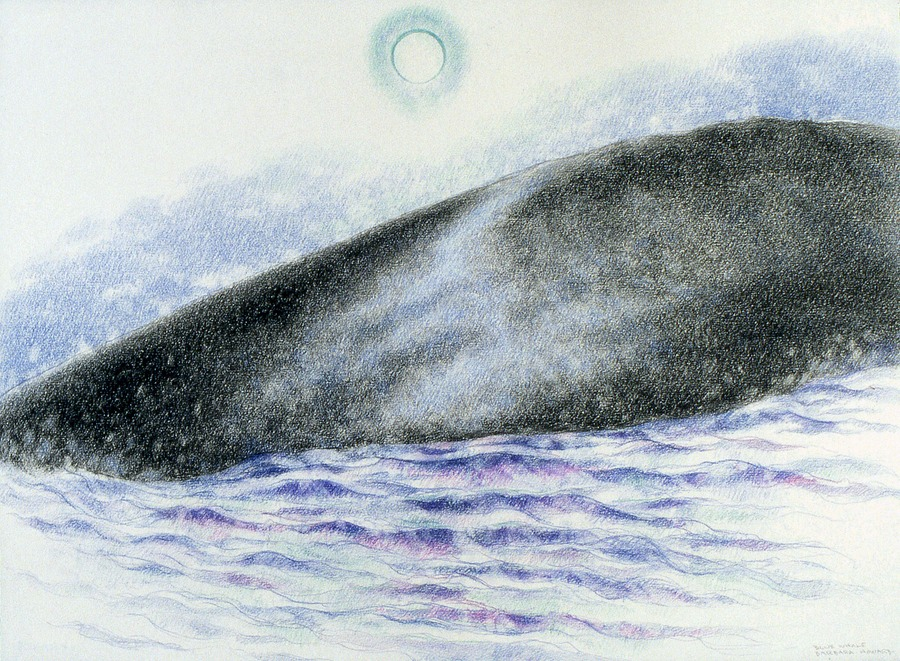 Blue whale: Evening