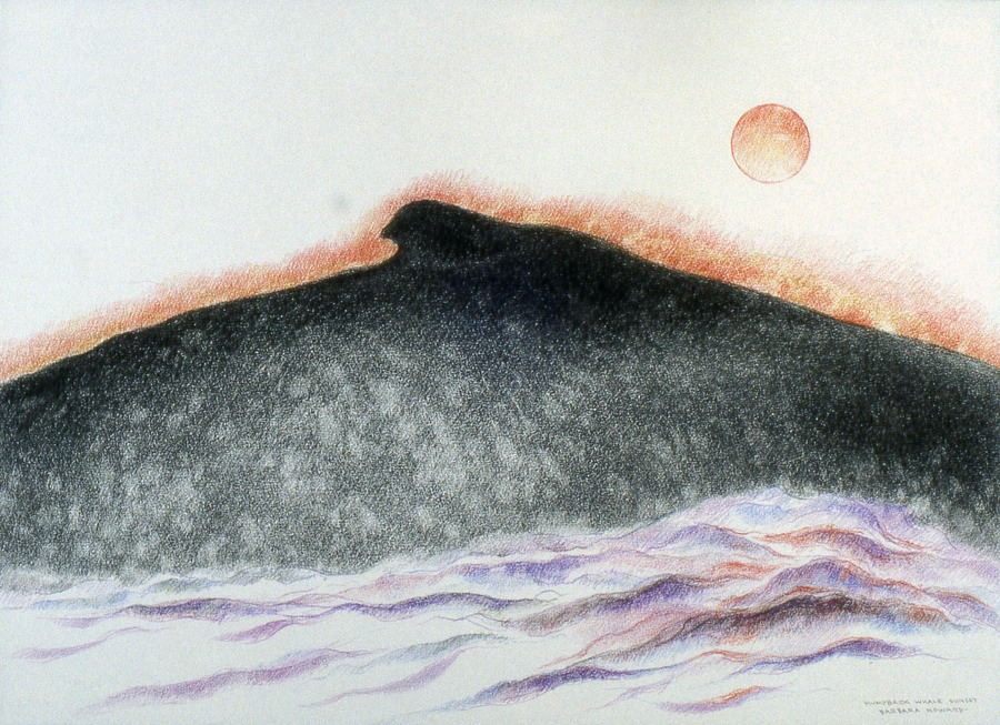 Humpback whale: Sunset